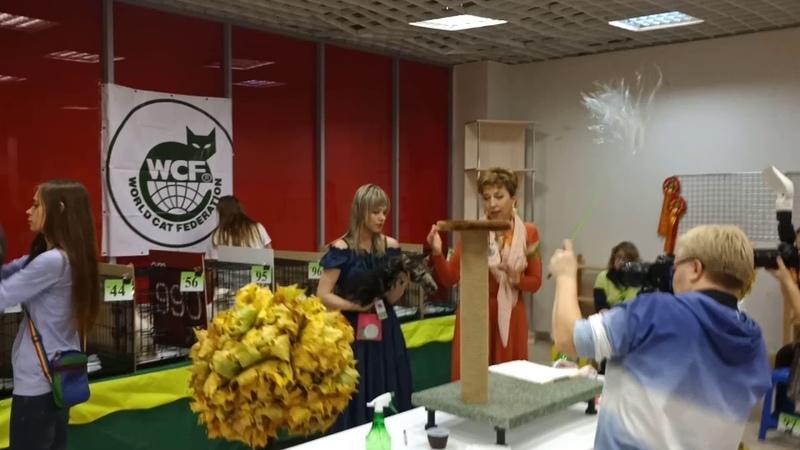 10 мес.Perseya Rysenok 5-е место из 14 фан-шоу ПДШ 14102018