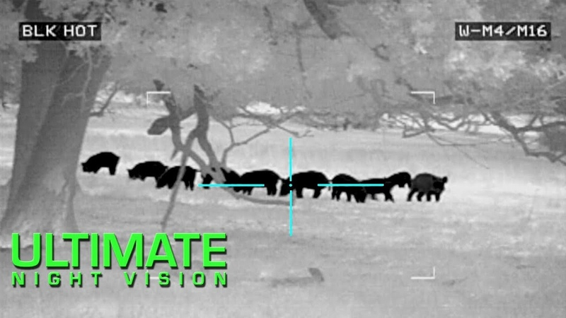 Thermal Hog and Predator Hunting | 50 Hogs and 9 Coyotes Down