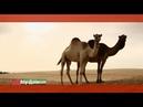 Орел и решка. Курортный сезон Абу-Даби. ОАЭ