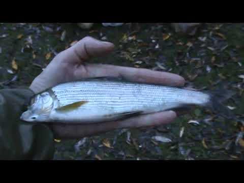 Горная Шория. Рыбалка на хариуса.