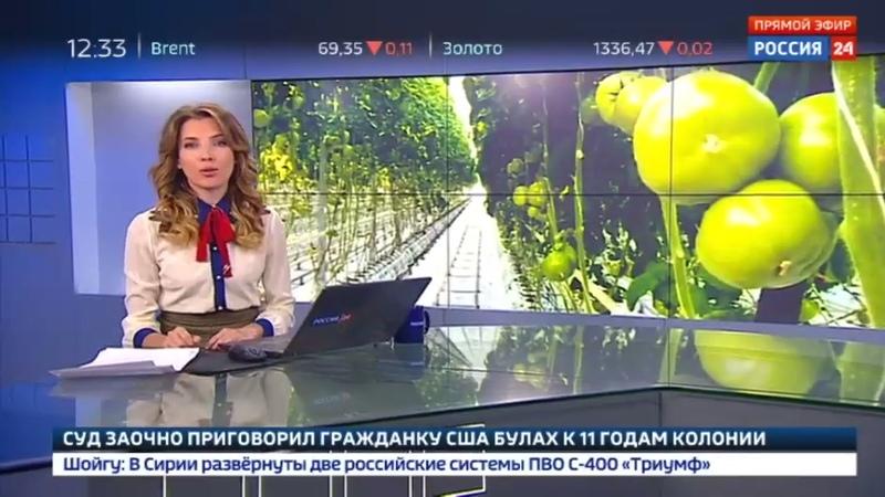 Новости на Россия 24 • На Сахалине строят тепличный комплекс площадью 3,5 гектара