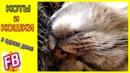 FB Кошачьи будни Нежный кот Еврик Малыш и лохматые