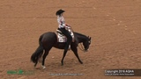 A Judges Perspective 2016 Select Western Riding World Champion