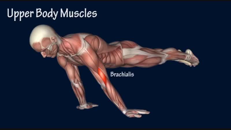 SLs How to Planche Progression Muscle Anatomy Training Program EasyFlexibility