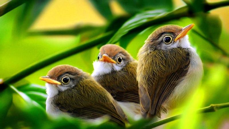 Утреннее пение птиц в лесу. Звуки природы без музыки.
