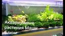 Аквариумные растения Маши Блюм