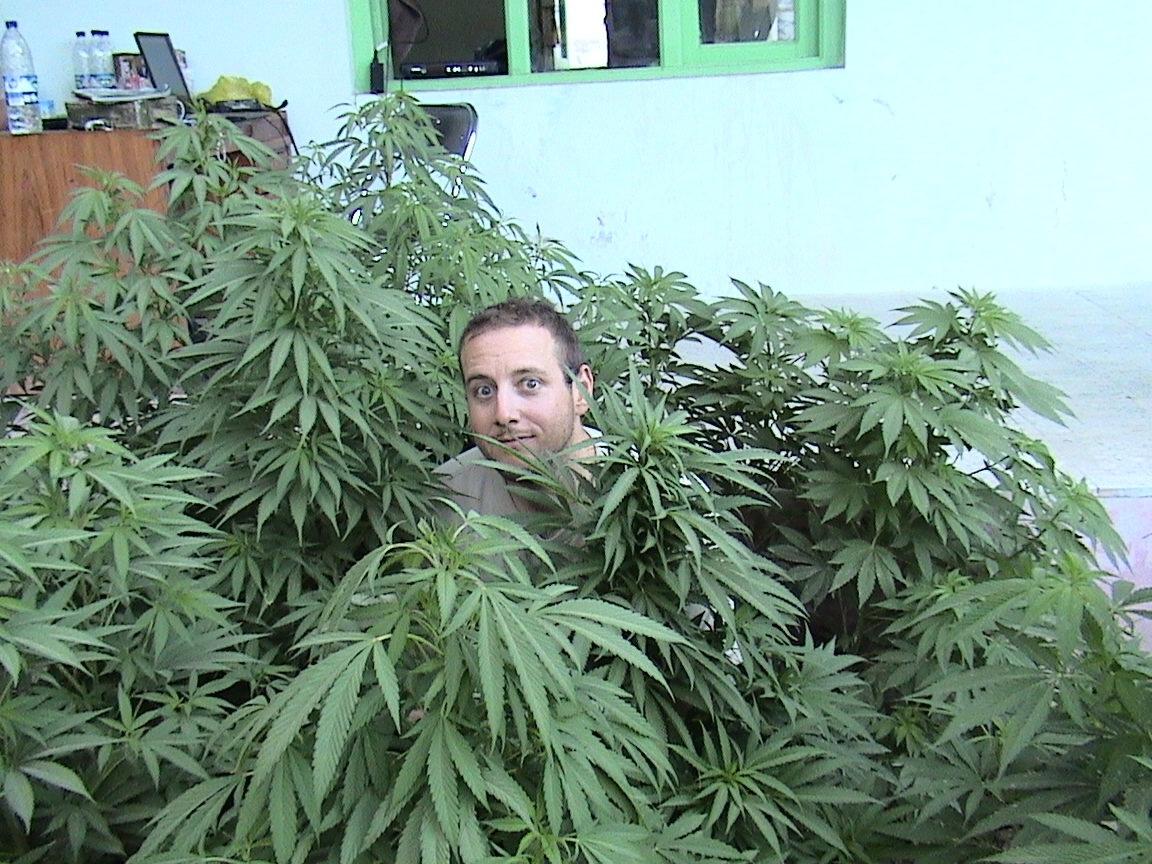 Фото парень и марихуана купить в украине элитные семена конопли