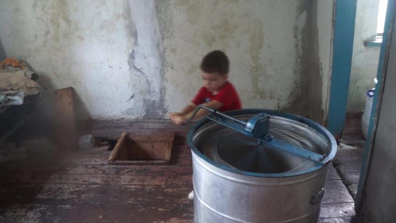 Юный добытчик меда.