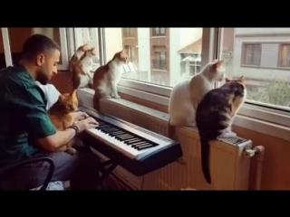 Прекрасная музыка, прекрасный человек, прекрасные кошки