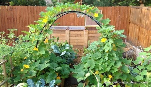 выращивание огурцов на арках огурцы выращивать можно и с помощью специальной арочной постройки из прутьев (металлических или из лозы). высота дуг до 2 м, ширина между ними - чуть больше метра,