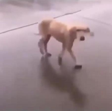 Dancing dog-Собакен из маски шоу
