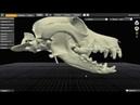 Перелом нижней челюсти у собак остеосинтез с применением предоперационного планирования