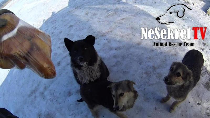 Накормил бездомных собак. Помощь животным в городе Улан-Удэ, Россия