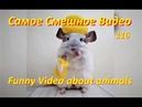 Самые смешные видео про животных 116 Funny video