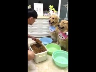 Собаки поразили хозяина своим аппетитом и во время завтрака принесли тазы из ванной