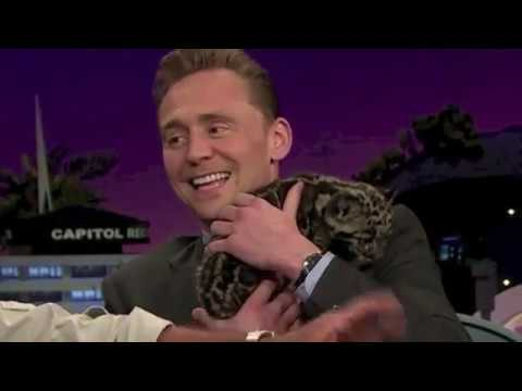 Animals loving tom hiddleston for 1 minute straight