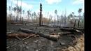 Последствия пожара в Воронежском заповеднике
