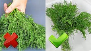 Зелень СЕКРЕТЫ Нужно успеть! УКРОПНАЯ ЗАВИСИМОСТЬ
