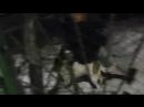 001_любовь собаки к брату сергею пророка сам боя