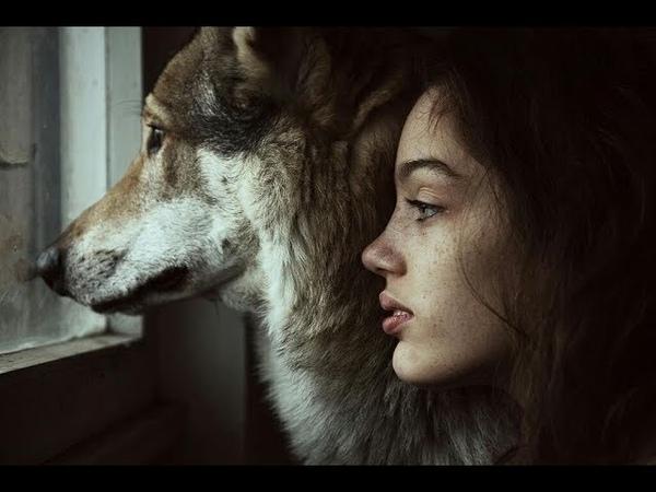 Просто слезы на глазах Послушайте Волк