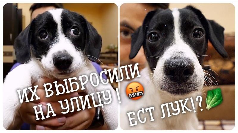 Щенков выбросили на улицу Нашел сестру пристроенного щенка на улице