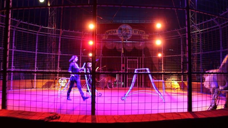 Цирк Арена-Ягуар в Набережных Челнах!