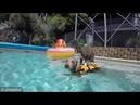 Кот плавает в бассейне, сидя на собаке. Роман Денисовець