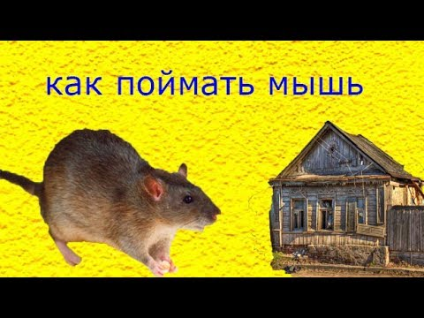 как поймать мышь Best Mouse Trap Ever How To Make Bucket Mouse Trap