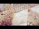 Постельное белье Леопарды 3D
