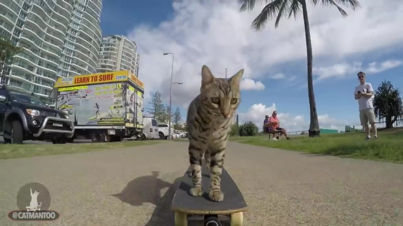 CAT PUSHES SKATEBOARD HIMSELF