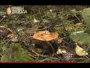 Искусственные грибы из гидрогеля! Как нас травят грибами!