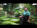 Ботанический сад ПГНИУ. Экскурсия с Александром Дядиком