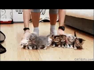 How hard is to take a picture of 10 kittens together. Well, Its impurrsible mission