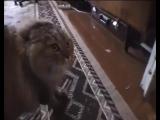 Разговаривающий кот
