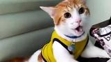 Кот который научился кричать Гол! стал звездой интернета