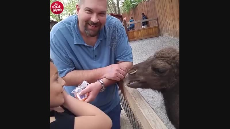 Hayvanlar ve insanlar arasındaki birlikinden komik anlar