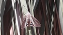 First meeting with Palm moth Paysandisia archon
