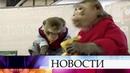 Барнаульские защитники животных требуют закрыть передвижной контактный зоопарк из Петербурга.