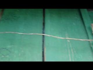 Коврики с Ньючик-На пасеке-Подключили газ-Миша помог найти родителей-НАШИ ЗРИТЕЛИ ИЗ МИНУСИНСКА!.mp4