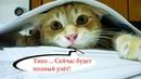 Приколы с котами с ОЗВУЧКОЙ – Смешные коты 2018 - Попробуй не засмеяться - Domi Show