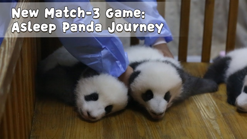 New Match-3 Game Asleep Panda Journey   iPanda