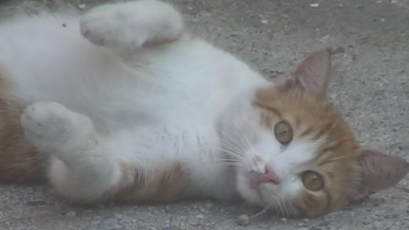 Мальчик и рыжий кот Red cat 赤い猫 Rothaarige Katze 红猫 Chat rouge القط الأحمر Gato लाल बिल्ली 빨44036