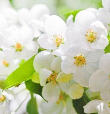 Вот Солнце. Далеко оно от нас. Вселенская планета, а как взойдёт оно, лучом цветка коснётся — и в радости раскроется цветок. Так далеки они, казалось, друг от друга — великое, огромное светило и маленький совсем цветок, а меж собою связаны. Не могут друг