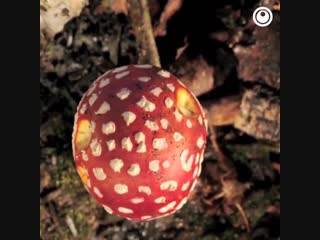 Растут как грибы: Mushroom Bloom Timelapse
