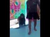 морской котик шутник