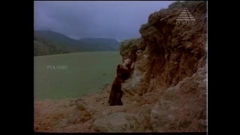 Brahma 1991 (Bramma)