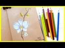 Рисуем Орхидею цветными карандашами Запись трансляции 18 06 18