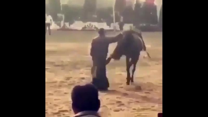 Обуздать лошадку сложно