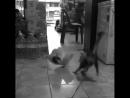 Когда твой кот смотрит слишком много реслинга!