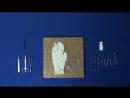 Базовая латексная модель Основы микрохирургии